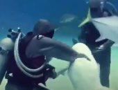 فيديو.. سمكة قرش تقتل راكب أمواج فى أستراليا
