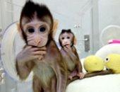 """""""القرد لسه بيتنطط ولا بطل تنطيط"""".. مش بس الفئران.. 50 مليون حيوان يخضع للتجارب فى الأبحاث العلمية سنويا.. القردة والكلاب والضفادع أشهرها.. وبنكرياس الكلاب ساعد فى اكتشاف الأنسولين لعلاج مرضى السكر"""