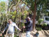 نقيب الزراعيين يطالب بالتوسع فى زراعة أشجار التوت المصرى على الترع والمصارف