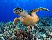 خطة إماراتية لمواجهة نفوق السلاحف البحرية وتشريع جديد للمحافظة على أنواعها