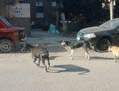 صور.. الكلاب الضالة تعرض أرواح سكان مدينة نصر للخطر