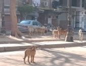 صور..انتشار الكلاب الضالة فى شارع رايل بحلوان  يثير ذعر الأهالى