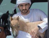 """""""الحصان جوه العربية"""".. ولى عهد دبى يصطحب """"مهر صغير"""" داخل سيارته"""