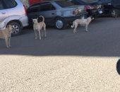 شكوى من انتشار الكلاب الضالة بطرة البلد