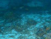 شاهد.. علماء بريطانيون يستكشفون أعماق المحيط الهندى لأول مرة
