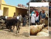 """صور.. """"الزراعة"""" تنهى تحصين 3 ملايين و635 ألف رأس ماشية ضد الحمى القلاعية والمتصدع فى 41 يوما.. """"منى محرز"""" تعلن انطلاق حملة جديدة للأبقار فقط لحمايتها من الجلد العقدى أبريل المقبل.. وتناشد المربين بالاستجابة"""