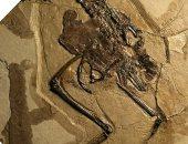 عمره 110 ملايين سنة.. العثور على طير قديم داخل جسم بيضة