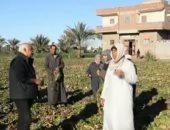 صاحب مزرعة: «الفلاح اللي بيزرع البنجر محظوظ والحصاد بعد 7 أشهر»