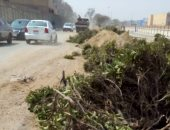 شكوى من تقطيع الأشجار المعمرة بشارع غرب الاستاد فى مدينة نصر