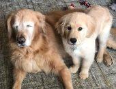 لم يتخلى عنه.. جرو صغير يساعد كلب أعمى على اللعب والمشى.. أعرف القصة؟