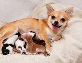 من أول الحمل والولادة لحد الفطام.. اعرف إزاى القطط والكلاب بتعيش أنوثتها وأمومتها
