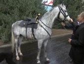 صور.. رئيس قرغيزستان يهدى بوتين حصان أورلوف وكلب تايجان وجرو