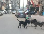 شكوى من انتشار الكلاب الضالة بشارع القومية العربية بإمبابة