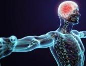 اعرف جسمك.. الجهاز العصبى الودى شبكة من الخلايا تنظم عمليات الجسم غير الطوعية