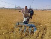 """صور..""""الشلاتين تجنى الخير""""..مزارع وادى حوضين يحصد أول محصول للقمح والشعير"""