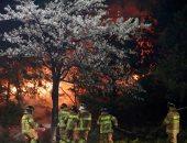 صور.. بدء جهود لاحتواء حرائق الغابات فى كوريا الجنوبية وإجلاء الآلاف
