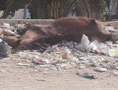 شكوى من انتشار القمامة فى جسر السويس