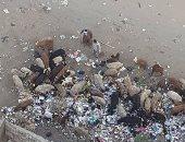 شكوى من انتشار القمامة بحدائق القبة