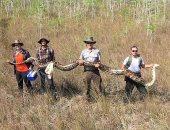 العثور على ثعبان بطول 17قدما.. اعرف سر وجود الأفاعى العملاقة فى فلوريدا؟