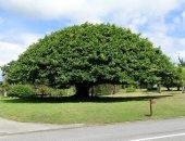 أيسلندا تحاول إعادة أشجار دمرها الفايكنج