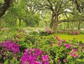 الدنيا الربيع ويا بدع الورد.. اسمع أشهر أغانى الربيع وشم النسيم