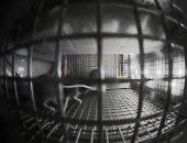 هكذا تصرفت الفئران عند زيارتها لمحطة الفضاء الدولية.. فيديو
