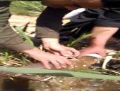 فيديو.. رجال شركة المياه والصرف بالأقصر يطهرون الشبكات