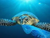 دراسة تؤكد: ارتفاع مستويات البلاستيك فى المحيطات بجميع أنحاء العالم