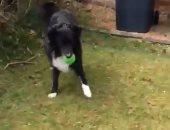 مهارات استثنائية.. كلب يمنع ساعى بريد من عمله قبل لعب الكرة معه.. فيديو