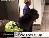 شاهد.. تدريب حصان ليكن مرشدا لضعيفى البصر فى لندن