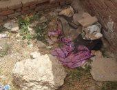 فحص الكاميرات وبلاغات التغيب لكشف غموض مقتل طفلة الهرم