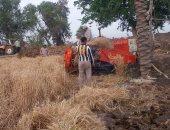 زراعة 2000 فدان من محصول الذرة الشامية على مستوى مراكز محافظة سوهاج