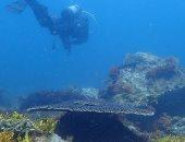 علماء يكتشفون نبعا من ثانى أكسيد الكربون فى أعماق المحيط
