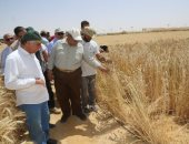 صور.. وزير الزراعة يفتتح موسم حصاد القمح بمشروع غرب المنيا