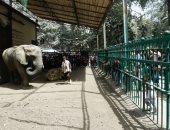 تعرف على إجراءات حديقة حيوان الجيزة لاستيراد فيلة من الهند × 13 معلومات