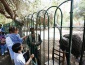 مدير حديقة الحيوان: وقف الإجازات و18 منفذا للتذاكر لمنع التكدس على الأبواب