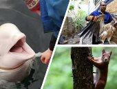 صور.. أندر 10 حيوانات فى العالم.. منها الأسماك التى تلتهم الخشب.. والخفاش الشيطان.. والضفدع الأرجوانى يوجد على الأرض منذ 100 مليون عام.. القرد ذو الأنف المسطح مهدد بالانقراض بسبب فقدان بيئته