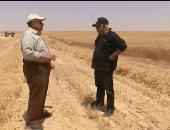 اليوم.. حمدى رزق يحاور وزير الزراعة وسط حقول القمح بغرب المنيا
