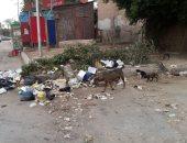 شكوى من انتشار القمامة أمام مدرسة بعزبة الهجانة فى مدينة نصر