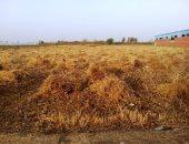 الزراعة: بدء موسم زراعة القمح بمشروع غرب المنيا أول أكتوبر