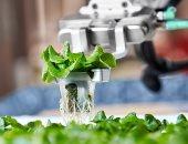 فيديو.. شاهد تجربة الزراعة المائية بتقنية الروبوتات الآلية