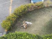 قارئ يشكو انتشار الكلاب الضالة فى المنطقة الصناعية بالحى السادس بمدينة نصر