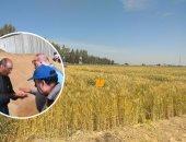 أمراض القمح والبنجر والفاكهة.. دورات تدريبية للعاملين بالزراعة فبراير المقبل