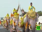شاهد.. عرض للفيلة تكريما لتتويج ملك تايلاند الجديد