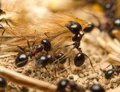 تعلم العمل الجماعى من كائنات صغيرة.. قصة النمل مع سيدنا سليمان