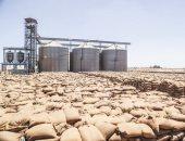 انخفاض معدلات توريد القمح المحلى إلى 1500 طن يوميا مع نهاية الموسم