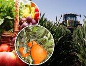 """""""الزراعة"""" دورة للتعريف بعينات المياه والتربة بالصوب الزراعية بـ5 محافظات"""