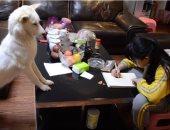 صينى يدرب كلبا على مراقبة ابنته أثناء أداء واجبها المدرسى