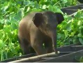 """سن المعاش مش بس للبشر .. تخصيص حديقة لتقاعد الأفيال لحمايتها بتايلاند""""فيديو"""""""