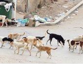 شكوى من انتشار  الكلاب الضالة فى باسوس بالقناطر الخيرية